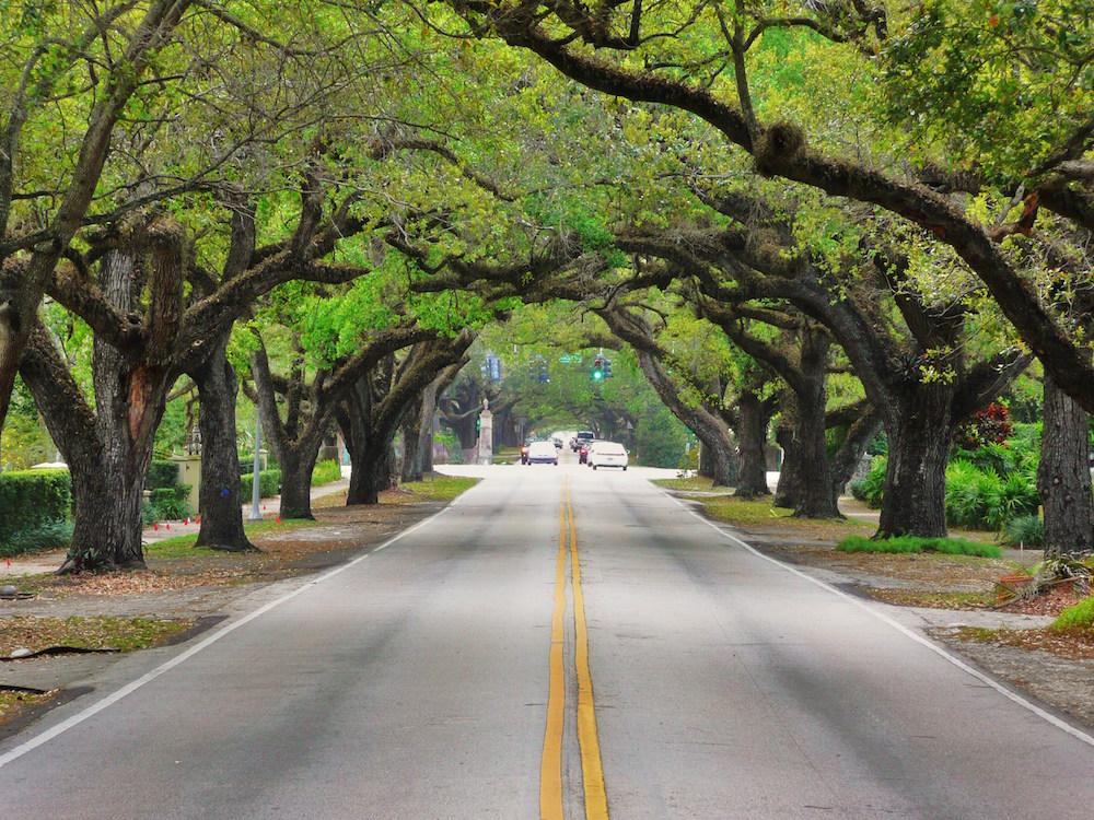 Hauskauf in den USA, Strasse mit Bäumen